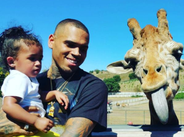 Chris Brown Giraffe