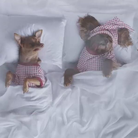 Insta's Celebrity Dogs Recreate Kanye's 'Famous' V